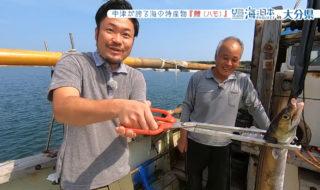 10月1日放送「中津鱧漁」