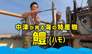 中津ハモ漁
