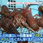 11月5日放送「伊勢えび海道」