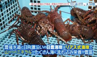東九州伊勢えび海道